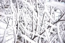 Free Snow On Branches Stock Photo - 4834560