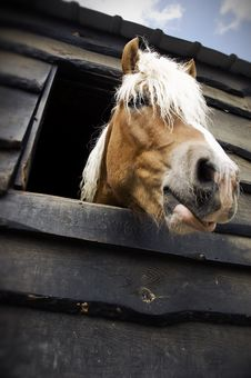 Free Horse Royalty Free Stock Images - 4835069
