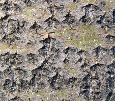 Free Wood Texture Royalty Free Stock Images - 4835489