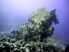 Free Giant Sea Fan And Reef Stock Photos - 4835633