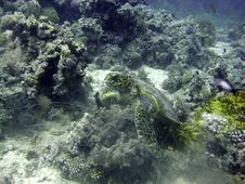 Free Hawksbill Turtle Resting Royalty Free Stock Images - 4835759