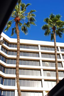 Free Sunroof View Of Palms Royalty Free Stock Photo - 4836225