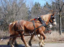 Free Ponies Stock Photography - 4836332