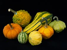Harvest Gourds Stock Image