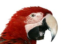 Free Macaw Parrot Stock Photo - 4837500