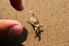 Free Beach Crab Stock Image - 4837641