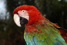 Free Macaw Parrot Stock Photography - 4837652