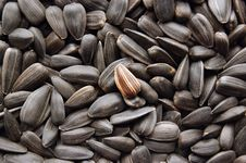 Free Sunflower Seeds Stock Photos - 4838433