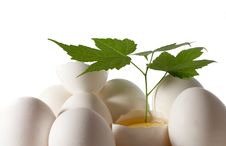 Free Egg And Green Sheet Stock Photography - 4838832