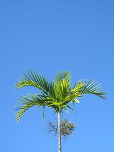 Free Palm Tree Stock Photos - 4839723