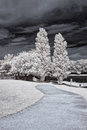 Free Infrared Park Royalty Free Stock Photography - 48371357