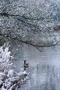 Free Lone Goose Swimming In Lake Stock Photos - 4845743