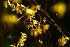 Free Spring Flowers Royalty Free Stock Image - 4840076