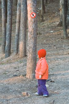 Free Girl In A Red Cap Goes For A Walk On A Pine-wood Stock Photos - 4840123