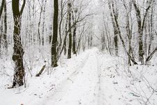 Free Winter Road Royalty Free Stock Photos - 4840198