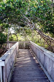 Boardwalk Through The Forest Royalty Free Stock Images