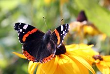 Free Butterfly Stock Photo - 4840870