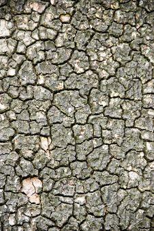 Free Tree Bark Stock Photos - 4841173