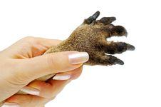 Free Animals Paw Royalty Free Stock Photos - 4842498