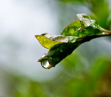 Free Fresh Leaves Stock Image - 4842541