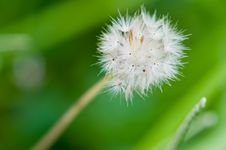 Free Little Dandelion Struggle To Survive Stock Photography - 4843732