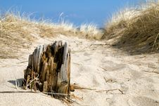 Free Timber In Sand Royalty Free Stock Photography - 4844077