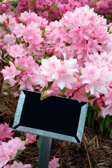 Free Sign In Azalea Bed Royalty Free Stock Images - 4844649