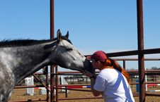 Free Woman Kissing Horse Royalty Free Stock Image - 4845266