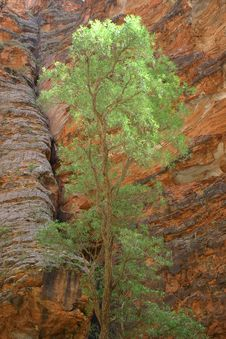 Green Tree Against Rock Royalty Free Stock Photography