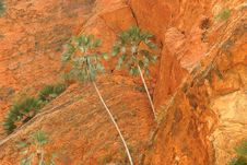 Green Treetops Against Rock Royalty Free Stock Image