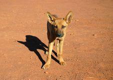 Free Doggy Looking At Camera Royalty Free Stock Image - 4845846