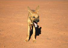 Free Doggy Yawning Stock Images - 4845854