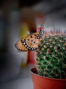 Free Butterfly Royalty Free Stock Photo - 4846785
