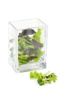 Free Lettuce In A Vase Stock Photo - 4847580