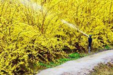 Free Spring Watering Royalty Free Stock Photo - 4847855