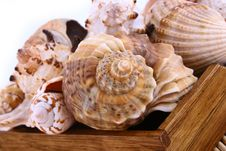 Free Seashell Royalty Free Stock Images - 4848609