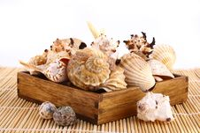 Free Seashell Stock Photography - 4848642