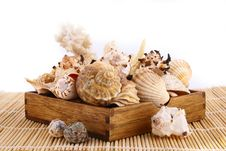 Free Seashell Stock Photo - 4848680