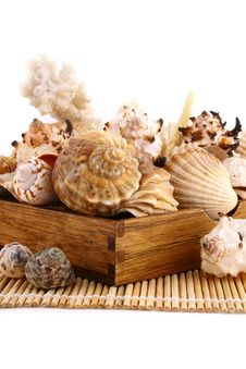 Free Seashell Royalty Free Stock Photo - 4848705