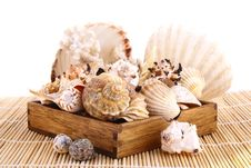 Free Seashell Stock Photography - 4848752