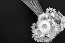 Free Daisy Flowers Bunch Royalty Free Stock Images - 4848819