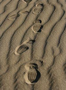 Free Footprint Stock Photos - 4849713