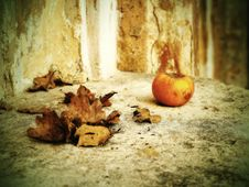 Free Autumn Still Life Royalty Free Stock Photos - 48489468