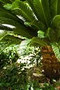 Free Tropical Forest Scene Royalty Free Stock Image - 4851496