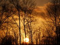 Free Burning Sunlight Stock Image - 4851501