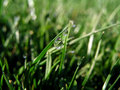 Free Grass Dew Drops Stock Photography - 4856692