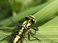Free Dragonfly 02 Stock Image - 4859931