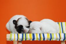 Free Puppies Royalty Free Stock Image - 4850256