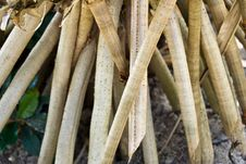 Free Dried Bamboo  That Are Cut And Bundled Stock Images - 4851554