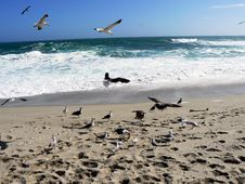 Free Freedom Of The Gulls Stock Photos - 4852223